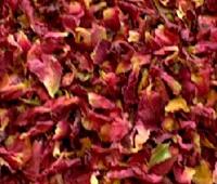 乾燥したバラの花